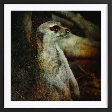 Timon Framed Print