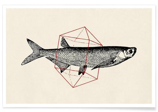 Fish in Geometrics II -Poster