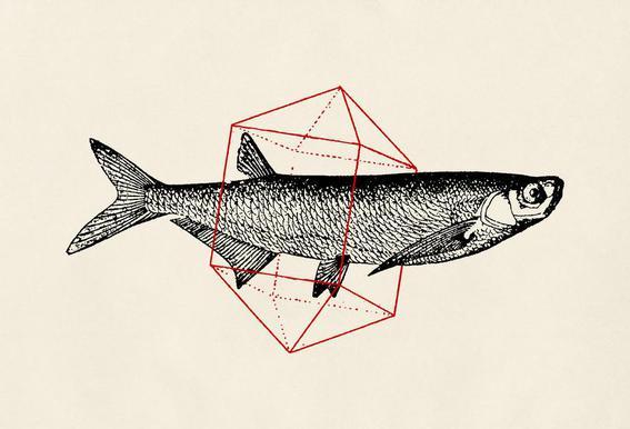 Fish in Geometrics II Acrylic Print