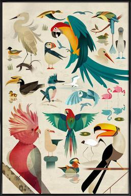 Birds - Poster in Standard Frame