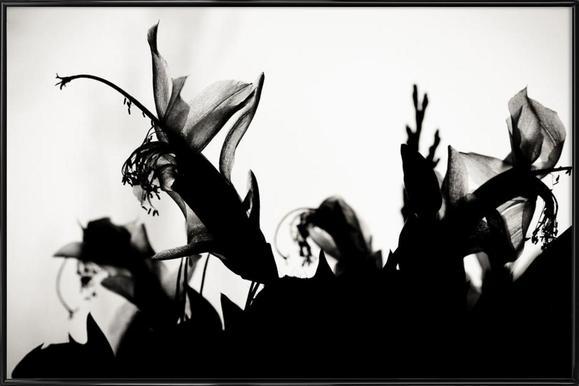 Blossoming II Framed Poster