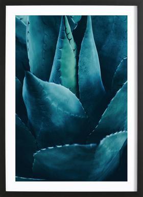 Cactus No.4 Framed Print