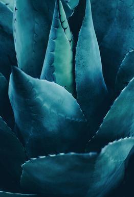 Cactus No.4