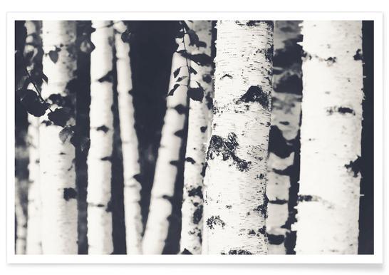 Birches - Premium Poster