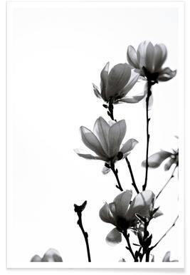 Black Magnolia poster