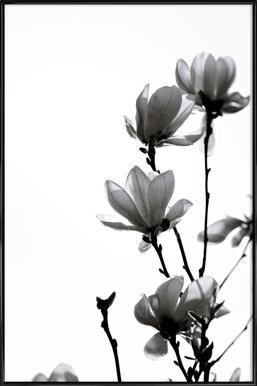 Black Magnolia -Bild mit Kunststoffrahmen