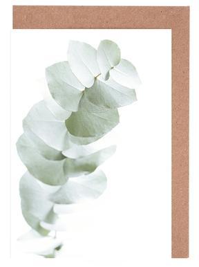 Eucalyptus White 1 Greeting Card Set