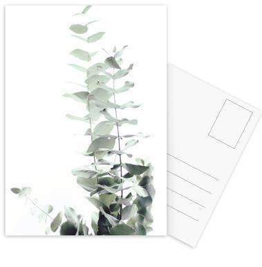 Eucalyptus White 2 Postcard Set