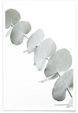 Eucalyptus White 3 -Poster