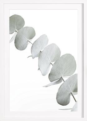 Eucalyptus White 3 - Poster in Wooden Frame