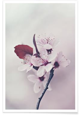 Hanami Cherryflower - Premium Poster