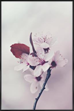 Hanami Cherryflower - Poster in Standard Frame