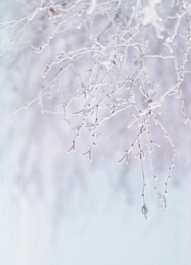 Frozen Twigs Pastel Canvas Print