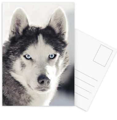 Husky ansichtkaartenset