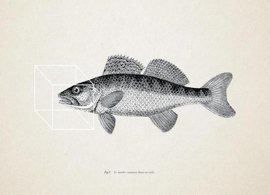 Fish#1 Canvas Print