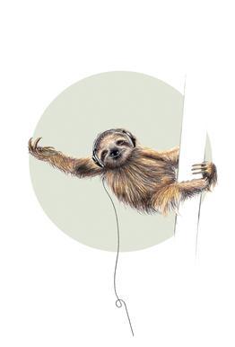 Sloth Aluminium Print