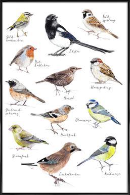 Plakat Vögel -Bild mit Kunststoffrahmen