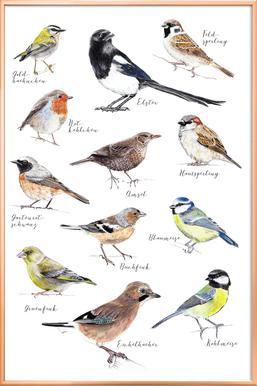 Plakat Vögel