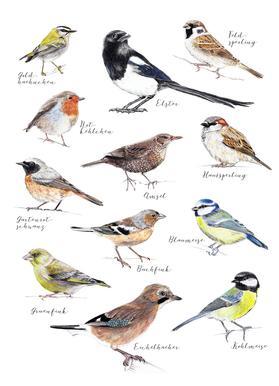 Plakat Vögel Canvas Print