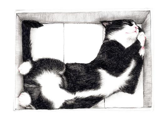 Katze im Karton Canvas Print