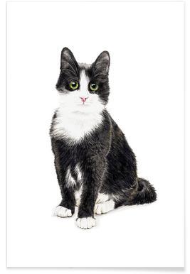Katze Murmelauge Poster