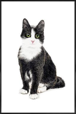Katze Murmelauge