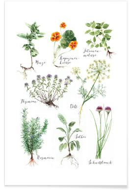 Kitchenherbs poster