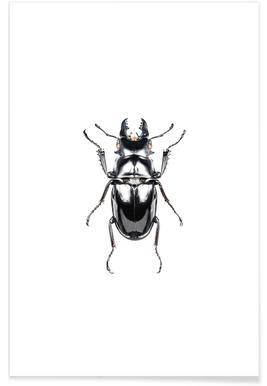 Odontolabis Siva Poster