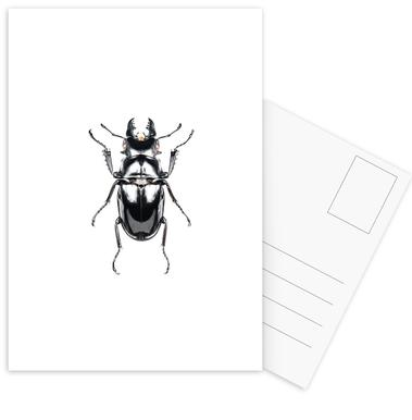Odontolabis Siva -Postkartenset