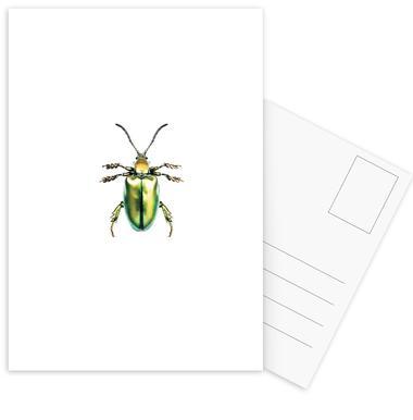 Sagra Femorata -Postkartenset