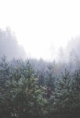 Misty Forest Aluminium Print