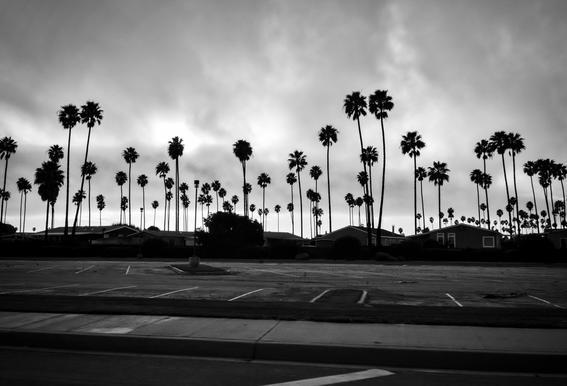 Palmtree Takeover Acrylic Print