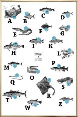 alphabet of fish, animal ABC -Poster im Alurahmen