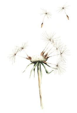 Dandelion -Acrylglasbild