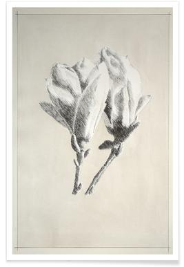 Profond - Magnolia