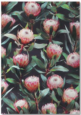 Evening Proteas in Color -Notizblock