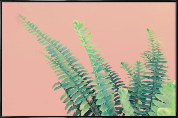Ferns on Blush Prints affiche encadrée