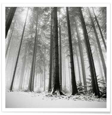 Nur Die Wälder Wissen Warum Poster