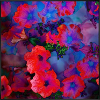 Ruby Red Vine Framed Poster