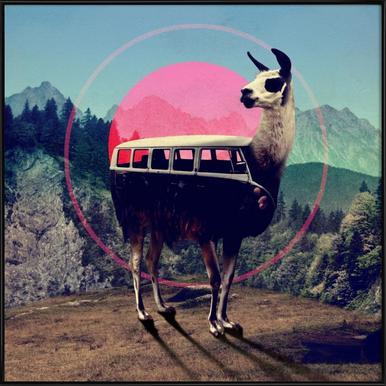 Llama Framed Poster