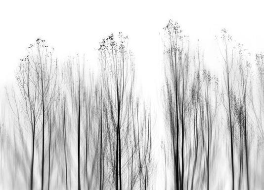 No Grounds - Paulo Abrantes