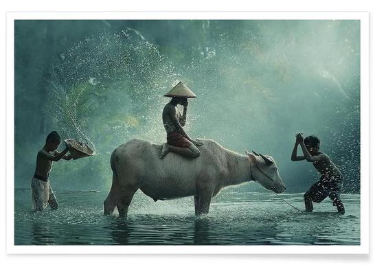 Water Buffalo - Vichaya - Premium Poster