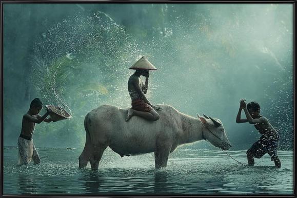 Water Buffalo - Vichaya - Affiche sous cadre standard