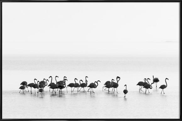 Flamingos - Joan Gil Raga - Poster in Standard Frame