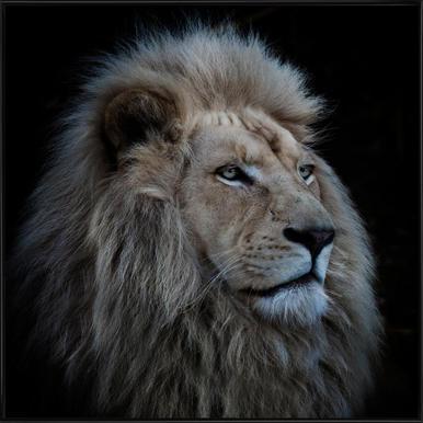 Proud Lion - Louise Wolbergs - Poster im Kunststoffrahmen