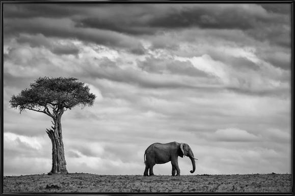 Elephant Landscape - Mario Moreno affiche encadrée