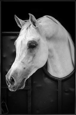 Arabian Horse - Waseem Al - Hammad ingelijste poster