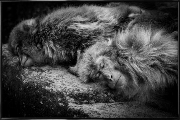 Sleeping - Akihiro Shibata