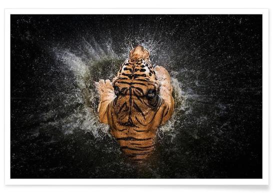Tiger Splash - Win Leslee Poster