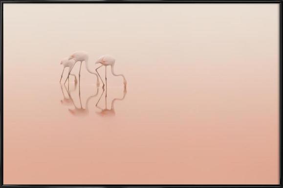 Pink Silence... - Natalia Rublina ingelijste poster
